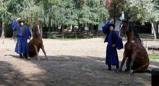 003-2_pferde